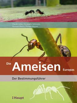 Das Titelbild ist aufgeteilt in 3 Teile – In der Mitte eine Ameise in Großaufnahme an einem Pflanzenstiel, oben zwei kleinere Ameisen und unten die Silhouette einer Ameise.