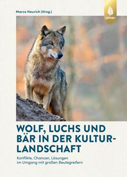 Ein ausgewachsener Wolf steht auf abschüssigem Gelände und blickt in die Ferne.