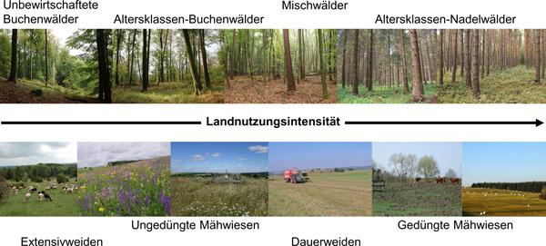 Zwei Bildreihen mit zunehmender Nutzungsintensität im Wald und im Grünland.