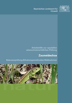 Das Titelbild zeigt eine Zauneidechse, die sich zwischen Laub und Grashalmen am Boden bewegt.