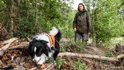 Im Vordergrund ein Hund mit Geschirr, der in vermodertem Totholz sucht, im Hintergrund die Hundeführerin vor Büschen und Bäumen.