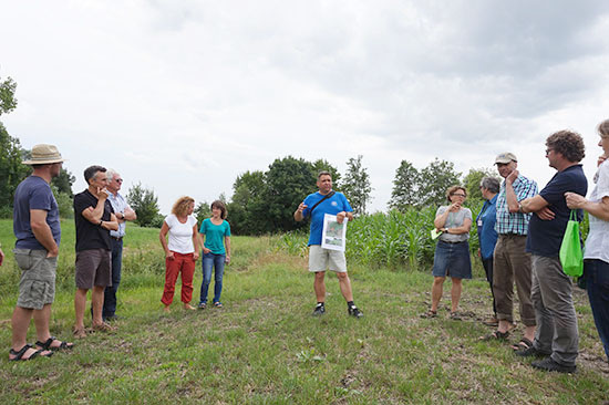 Die Exkursionsteilnehmer stehen am Rand eines Maisfeldes und hören dem Referenten bei seinem Vortrag zu.